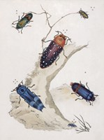 Chelsea Beetles-2 of 3 Framed Print