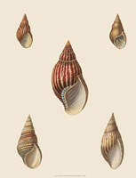 Shells-2 of 8 Fine Art Print