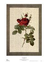 Grandiflora II Fine Art Print