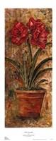 Liberty Amaryllis Fine Art Print