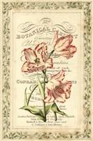Botanic Cabinet Fine Art Print