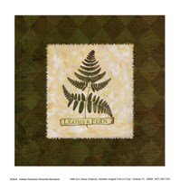 Leather Fern Fine Art Print