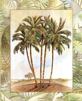 Palm Tree III Fine Art Print