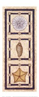 Sand Dollar & Shells Fine Art Print