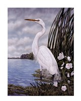 Great White Egret Fine Art Print