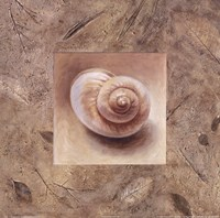 Shell IV Framed Print