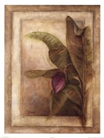 Plantano en Flor II Fine Art Print