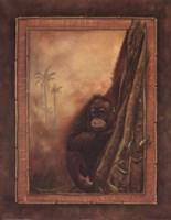 Orangutan II Fine Art Print