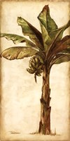 Tropic Banana II Framed Print