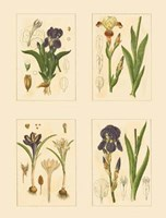 Miniature Botanicals I Framed Print