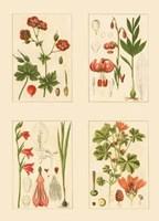 Miniature Botanicals II Fine Art Print