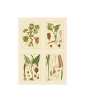 Miniature Botanicals IV Fine Art Print