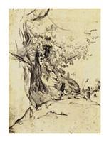 Sepia Tree Study Fine Art Print