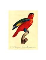Parrot, PL 95 Framed Print