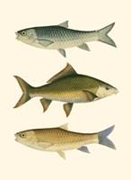 Antique Fish I Fine Art Print