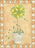 Tuscan Fruit II Fine Art Print