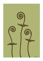 Dichromatic Fiddleheads III Fine Art Print