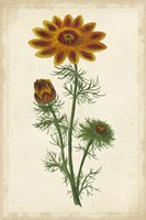 Vibrant Curtis Botanicals I Framed Print