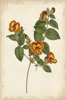 Vibrant Curtis Botanicals II Framed Print