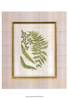Fern with Crackle Mat (H) II Fine Art Print