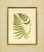 Fern with Crackle Mat (H) III Fine Art Print