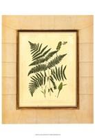 Fern with Crackle Mat (H) IV Fine Art Print
