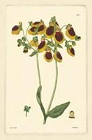 Yellow Curtis Botanical I Fine Art Print