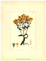 Yellow Curtis Botanical III Framed Print
