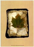 Kyoto Leaves V Fine Art Print