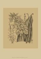 Orchid on Khaki(WG) III Fine Art Print