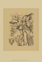 Orchid on Khaki(WG) V Fine Art Print