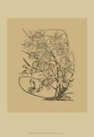 Orchid on Khaki(WG) VI Fine Art Print