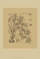 Orchid on Khaki(WG) VII Fine Art Print