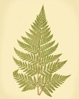 Lowes Fern I (PP) Fine Art Print