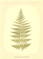 Lowes Fern V (PP) Fine Art Print