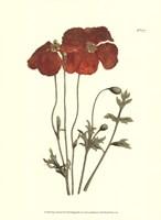 Fiery Florals II Fine Art Print