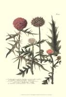 Weinmann, Pl. 315 Fine Art Print