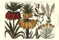 Printed Arena Botanical I Fine Art Print