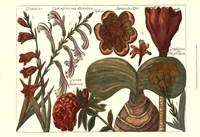 Printed Arena Botanical II Fine Art Print