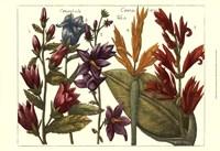 Printed Arena Botanical III Fine Art Print