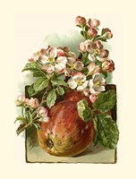 Apple Blossom Fine Art Print