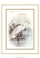 White Heron Fine Art Print