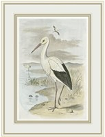 White Stork Fine Art Print