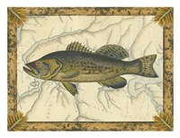 Black Bass on Map Fine Art Print