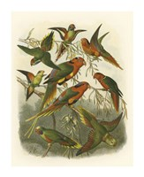 Red Cassel Birds I Fine Art Print