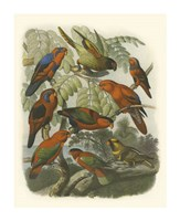 Red Cassel Birds II Fine Art Print