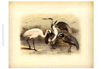 Egret & Heron Framed Print