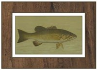Small-mouthed Black Bass Fine Art Print