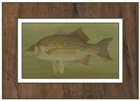 White or Silver Bass Fine Art Print