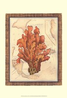 Exotic Map with Coral IV (D) Fine Art Print